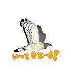 動く日本の野鳥 秋冬(個別スタンプ:01)