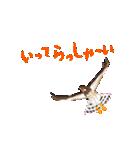 動く日本の野鳥 秋冬(個別スタンプ:02)