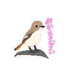 動く日本の野鳥 秋冬(個別スタンプ:08)