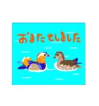 動く日本の野鳥 秋冬(個別スタンプ:10)