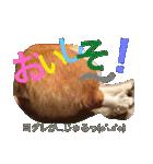 コーギー☆マンデー2(個別スタンプ:02)