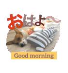 コーギー☆マンデー2(個別スタンプ:03)