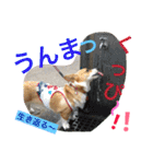コーギー☆マンデー2(個別スタンプ:06)