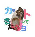 コーギー☆マンデー2(個別スタンプ:07)