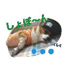 コーギー☆マンデー2(個別スタンプ:09)