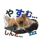 コーギー☆マンデー2(個別スタンプ:10)