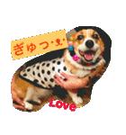 コーギー☆マンデー2(個別スタンプ:11)