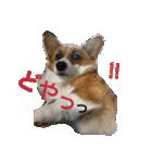 コーギー☆マンデー2(個別スタンプ:14)