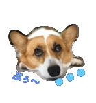 コーギー☆マンデー2(個別スタンプ:16)