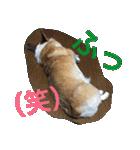 コーギー☆マンデー2(個別スタンプ:21)