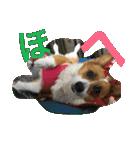 コーギー☆マンデー2(個別スタンプ:23)
