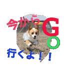コーギー☆マンデー2(個別スタンプ:25)