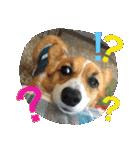 コーギー☆マンデー2(個別スタンプ:27)