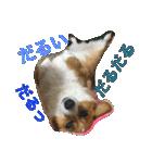 コーギー☆マンデー2(個別スタンプ:28)