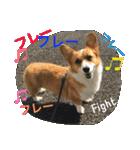 コーギー☆マンデー2(個別スタンプ:29)