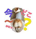 コーギー☆マンデー2(個別スタンプ:30)