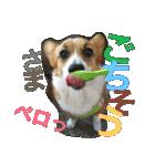 コーギー☆マンデー2(個別スタンプ:31)