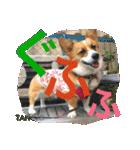 コーギー☆マンデー2(個別スタンプ:32)