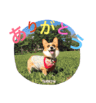 コーギー☆マンデー2(個別スタンプ:33)
