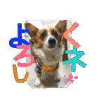 コーギー☆マンデー2(個別スタンプ:34)