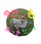 コーギー☆マンデー2(個別スタンプ:35)