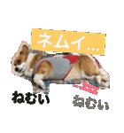 コーギー☆マンデー2(個別スタンプ:36)