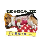 コーギー☆マンデー2(個別スタンプ:38)