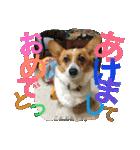 コーギー☆マンデー2(個別スタンプ:40)