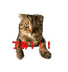 2匹の猫ちゃんの使いやすいスタンプ(個別スタンプ:02)