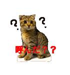 2匹の猫ちゃんの使いやすいスタンプ(個別スタンプ:03)