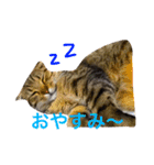 2匹の猫ちゃんの使いやすいスタンプ(個別スタンプ:04)
