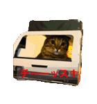 2匹の猫ちゃんの使いやすいスタンプ(個別スタンプ:05)