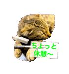 2匹の猫ちゃんの使いやすいスタンプ(個別スタンプ:06)