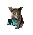 2匹の猫ちゃんの使いやすいスタンプ(個別スタンプ:07)