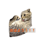 2匹の猫ちゃんの使いやすいスタンプ(個別スタンプ:11)