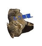 2匹の猫ちゃんの使いやすいスタンプ(個別スタンプ:12)
