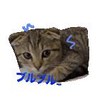 2匹の猫ちゃんの使いやすいスタンプ(個別スタンプ:13)