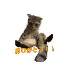 2匹の猫ちゃんの使いやすいスタンプ(個別スタンプ:15)