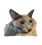 2匹の猫ちゃんの使いやすいスタンプ(個別スタンプ:16)