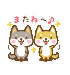 柴犬さんたちのシンプルスタンプ(個別スタンプ:40)