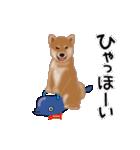 元気いっぱいの柴犬(個別スタンプ:1)