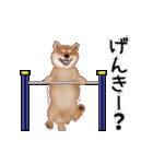 元気いっぱいの柴犬(個別スタンプ:5)