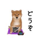 元気いっぱいの柴犬(個別スタンプ:6)