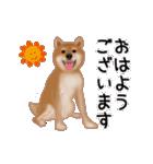 元気いっぱいの柴犬(個別スタンプ:9)