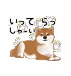 元気いっぱいの柴犬(個別スタンプ:11)