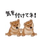 元気いっぱいの柴犬(個別スタンプ:12)