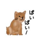 元気いっぱいの柴犬(個別スタンプ:15)