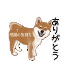 元気いっぱいの柴犬(個別スタンプ:16)