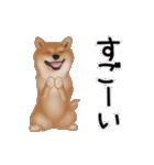 元気いっぱいの柴犬(個別スタンプ:19)