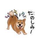 元気いっぱいの柴犬(個別スタンプ:20)